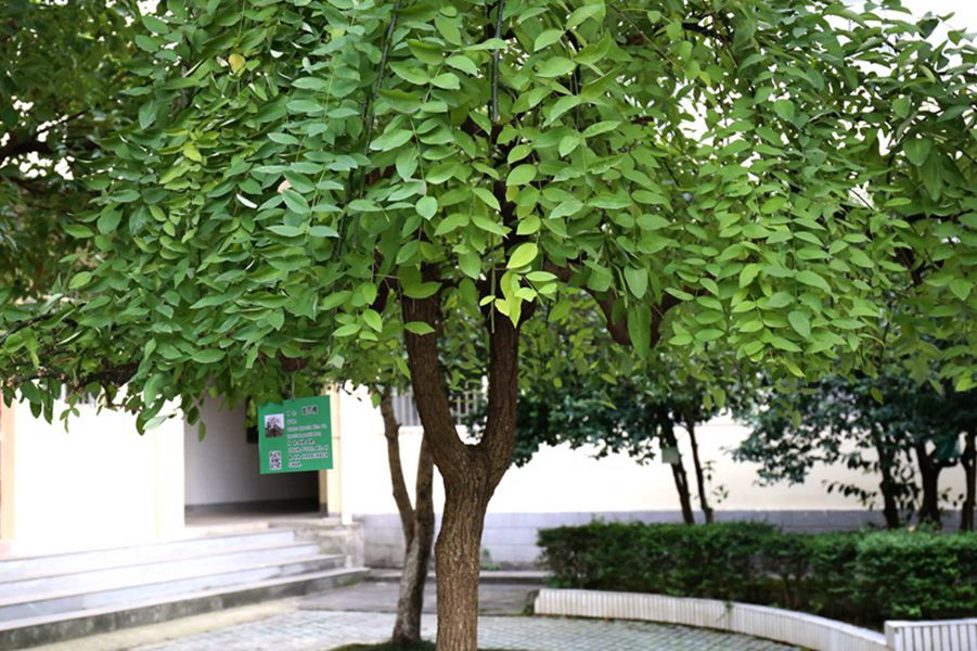 花草树木 佩戴名片 活动